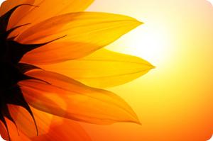 Summer Solstice Daisy
